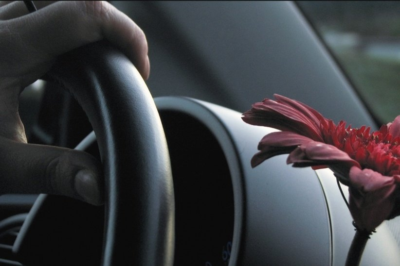 20150303230225-driving-flower-driving-force.jpeg